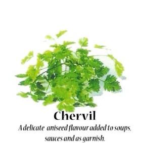 chervil_text