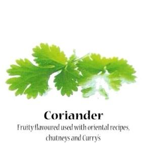 coriander_text