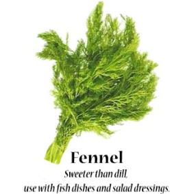 fennel_text