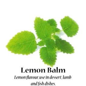 lemon-balm_text