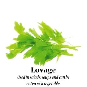 lovage_text