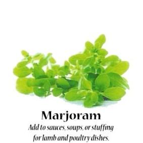 marjoram_text