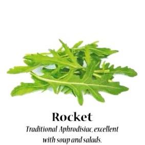rocket_text