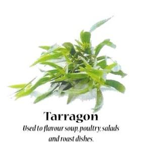 tarragon_text