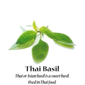 thai-basil_text